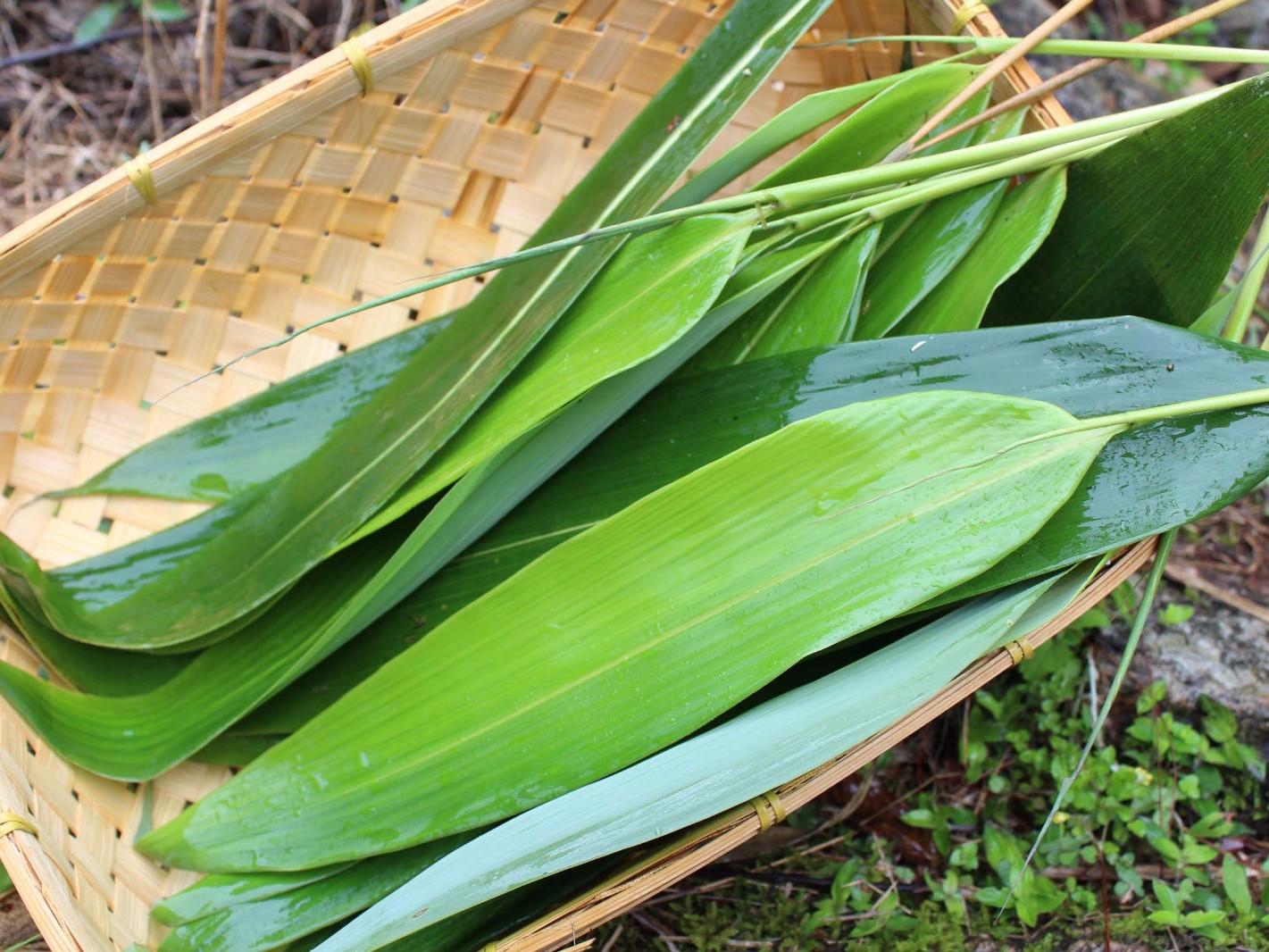 粽叶是什么植物的叶子